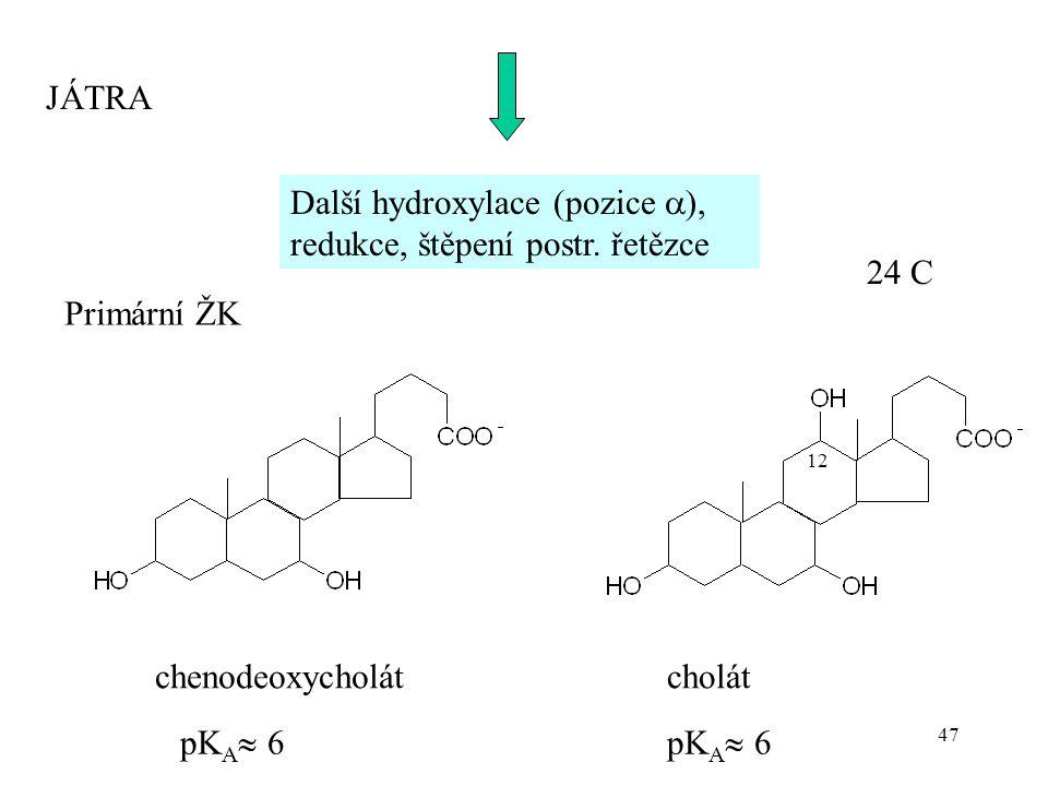 Další hydroxylace (pozice ), redukce, štěpení postr. řetězce