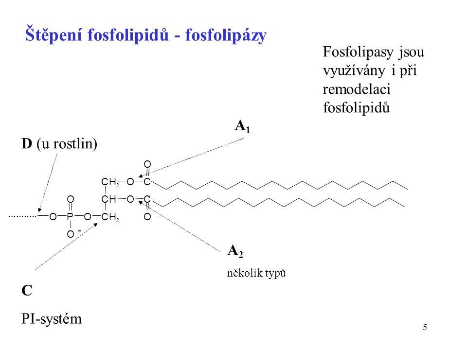 Štěpení fosfolipidů - fosfolipázy