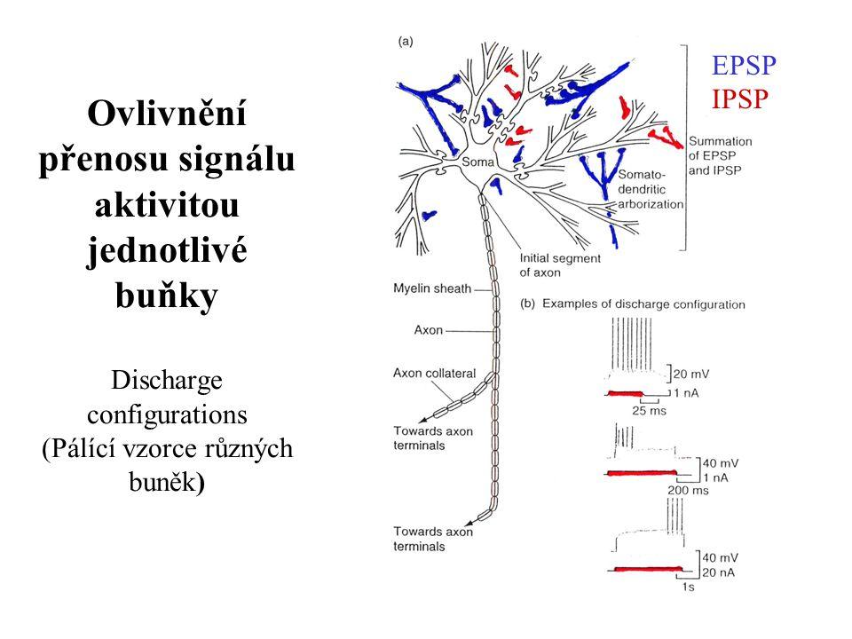 Ovlivnění přenosu signálu aktivitou jednotlivé buňky Discharge configurations (Pálící vzorce různých buněk)