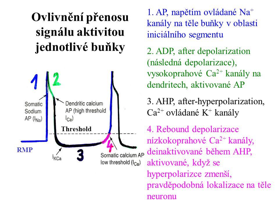 Ovlivnění přenosu signálu aktivitou jednotlivé buňky