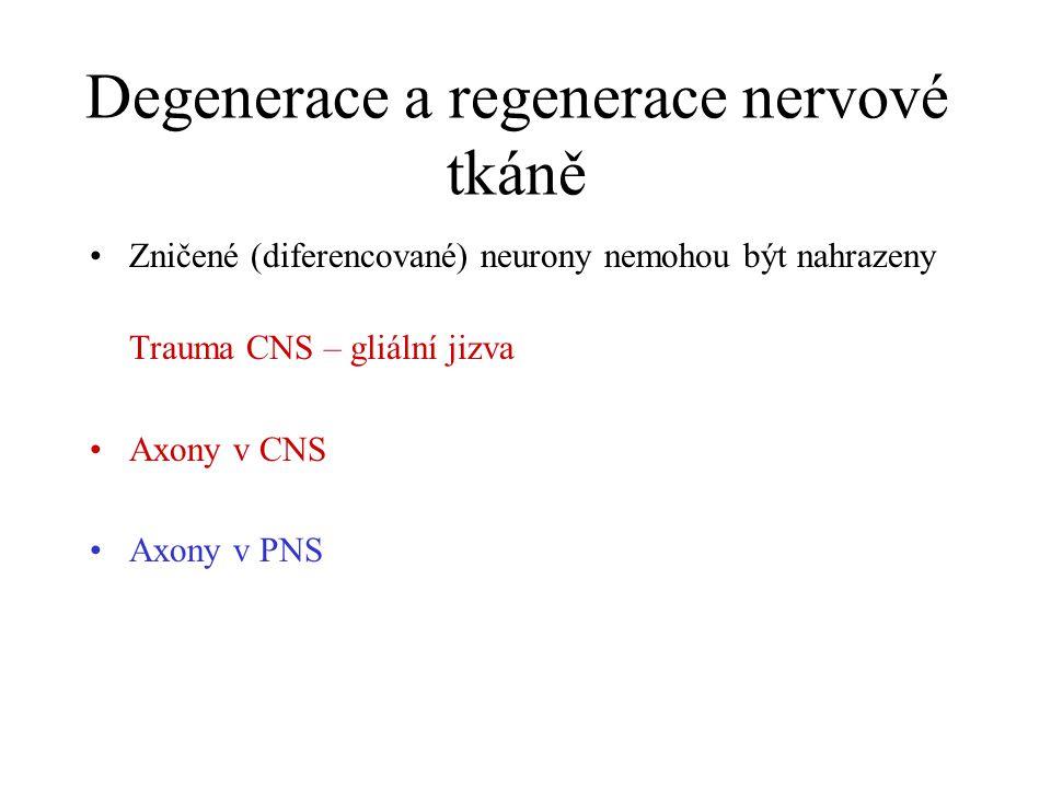 Degenerace a regenerace nervové tkáně