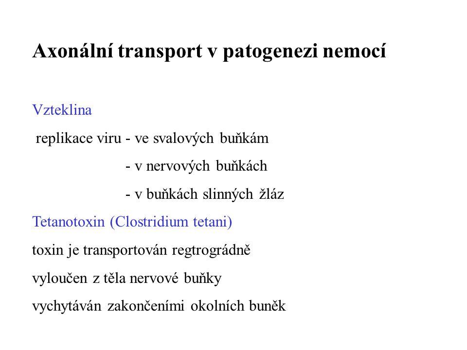 Axonální transport v patogenezi nemocí