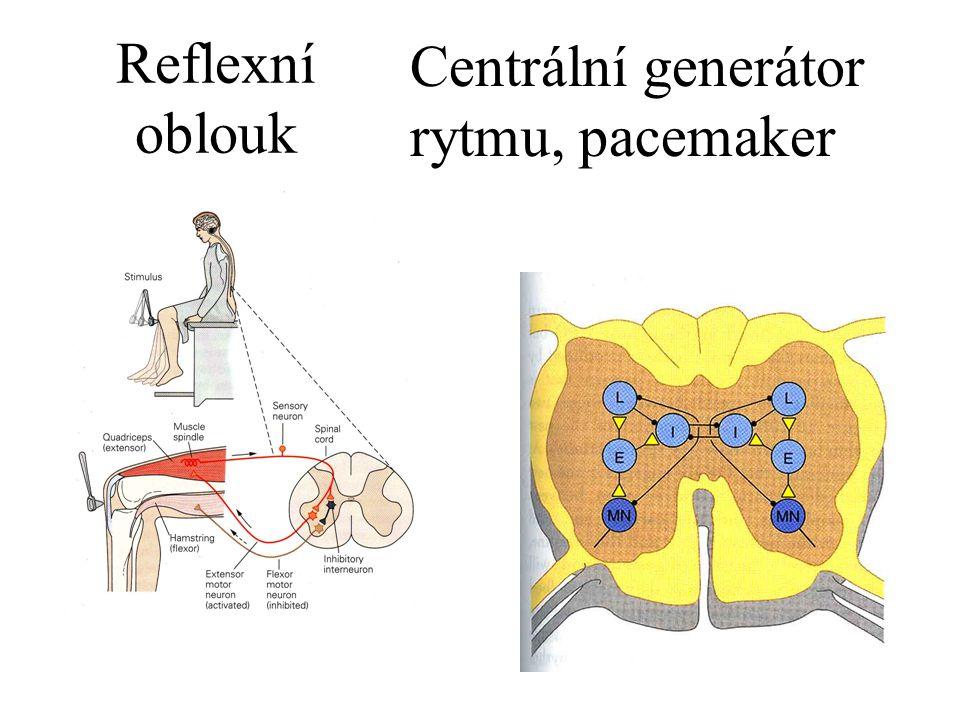 Centrální generátor rytmu, pacemaker