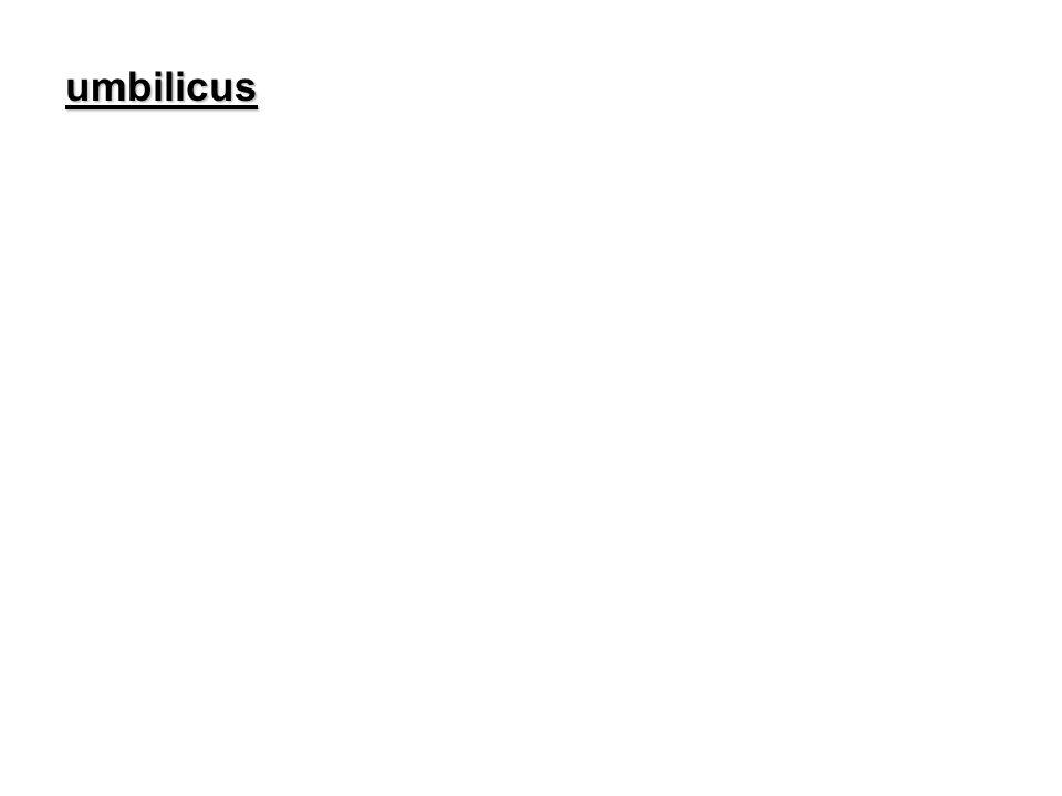 umbilicus umbilicus