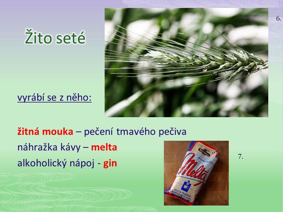 6. Žito seté. vyrábí se z něho: žitná mouka – pečení tmavého pečiva náhražka kávy – melta alkoholický nápoj - gin