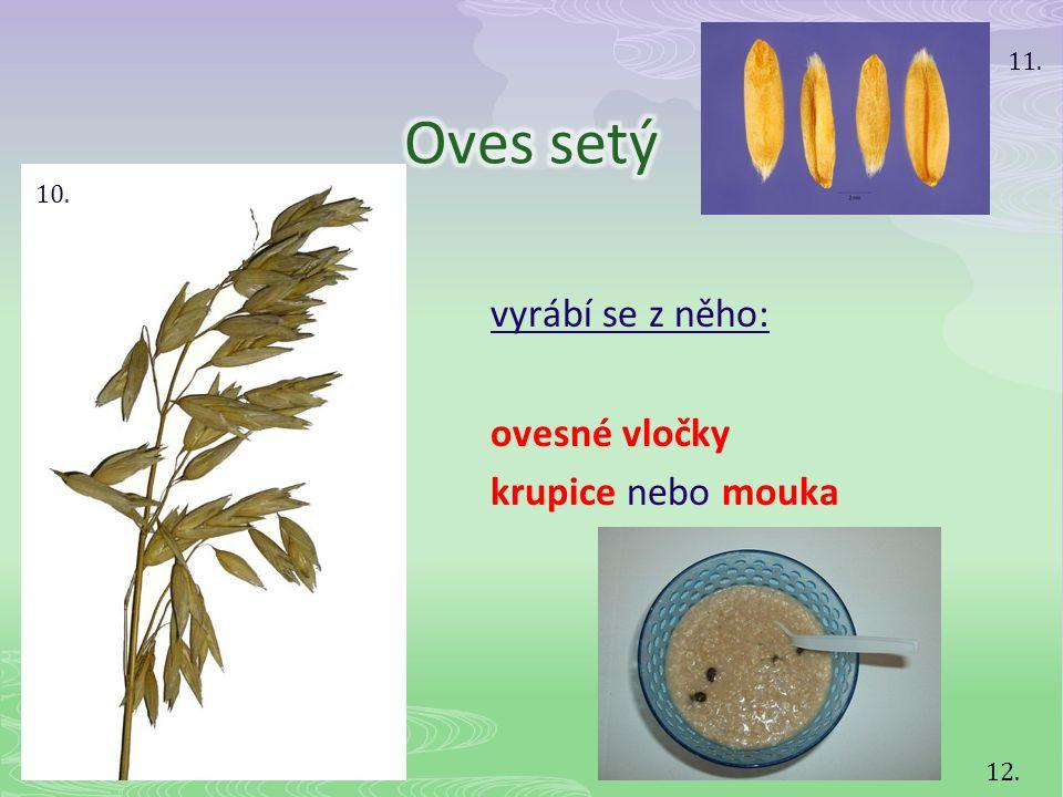 Oves setý vyrábí se z něho: ovesné vločky krupice nebo mouka 11. 10.