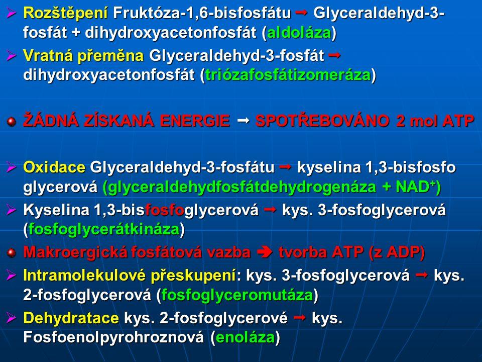 Rozštěpení Fruktóza-1,6-bisfosfátu  Glyceraldehyd-3-fosfát + dihydroxyacetonfosfát (aldoláza)