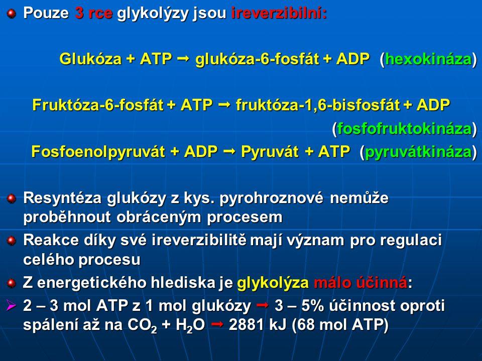 Fruktóza-6-fosfát + ATP  fruktóza-1,6-bisfosfát + ADP
