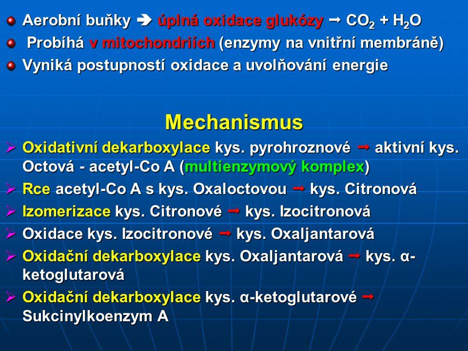 Mechanismus Aerobní buňky  úplná oxidace glukózy  CO2 + H2O