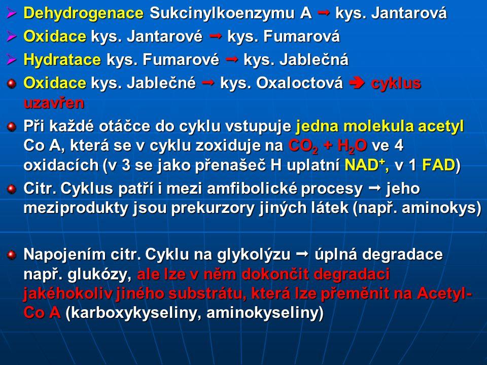 Dehydrogenace Sukcinylkoenzymu A  kys. Jantarová
