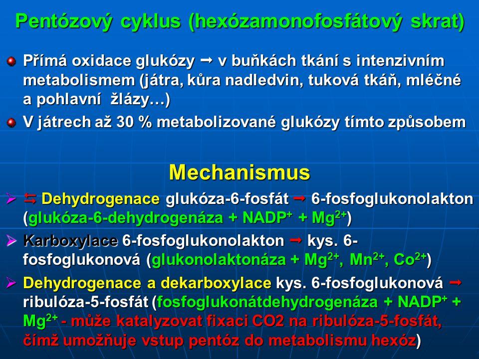 Pentózový cyklus (hexózamonofosfátový skrat)
