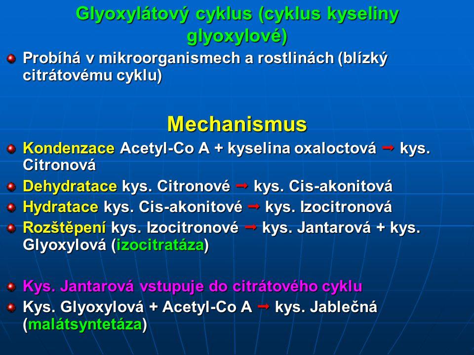 Glyoxylátový cyklus (cyklus kyseliny glyoxylové)
