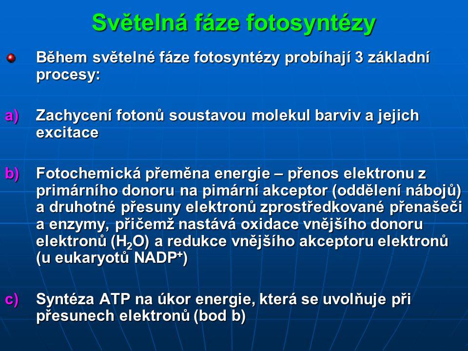 Světelná fáze fotosyntézy