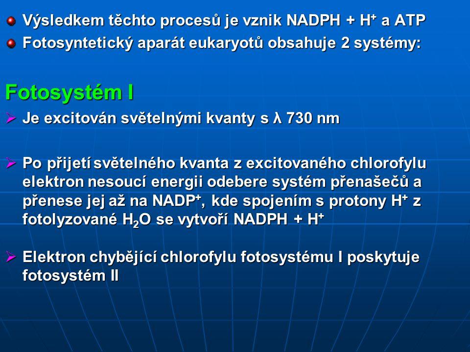 Fotosystém I Výsledkem těchto procesů je vznik NADPH + H+ a ATP
