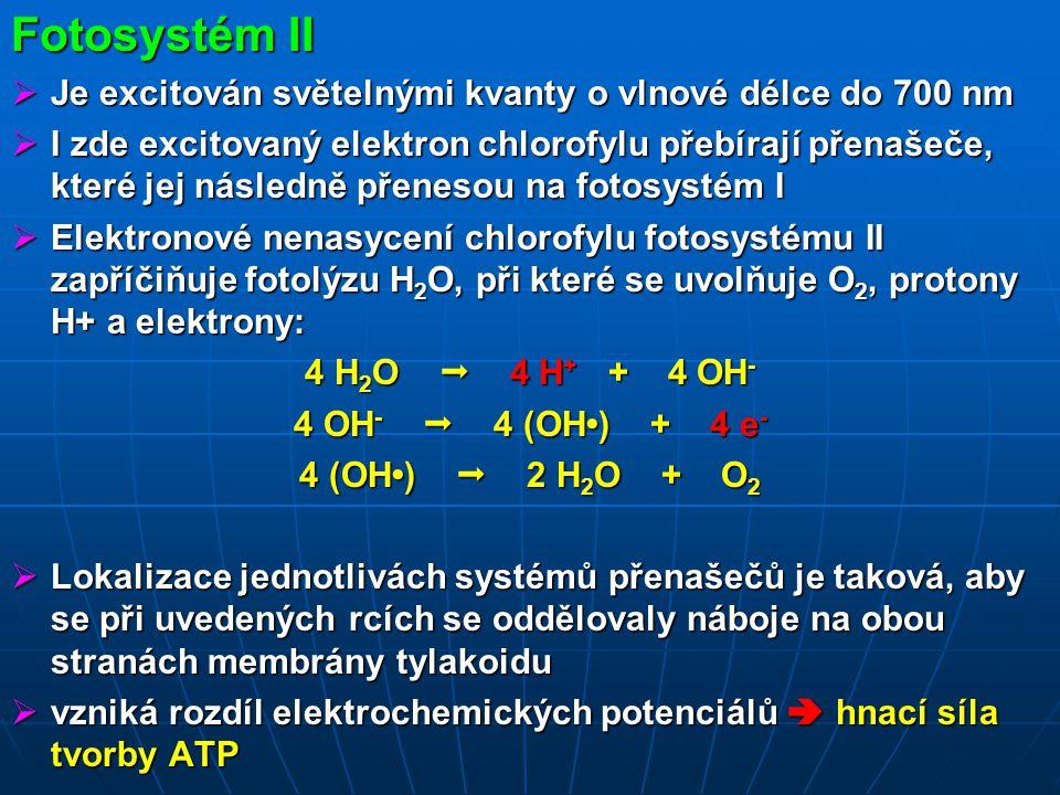 Fotosystém II Je excitován světelnými kvanty o vlnové délce do 700 nm