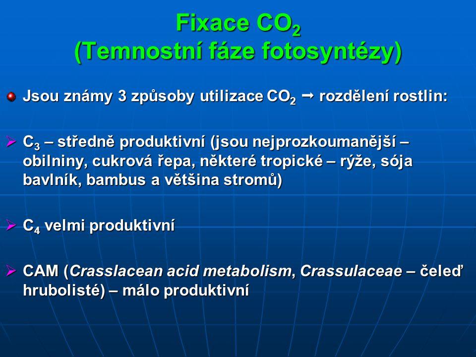 Fixace CO2 (Temnostní fáze fotosyntézy)