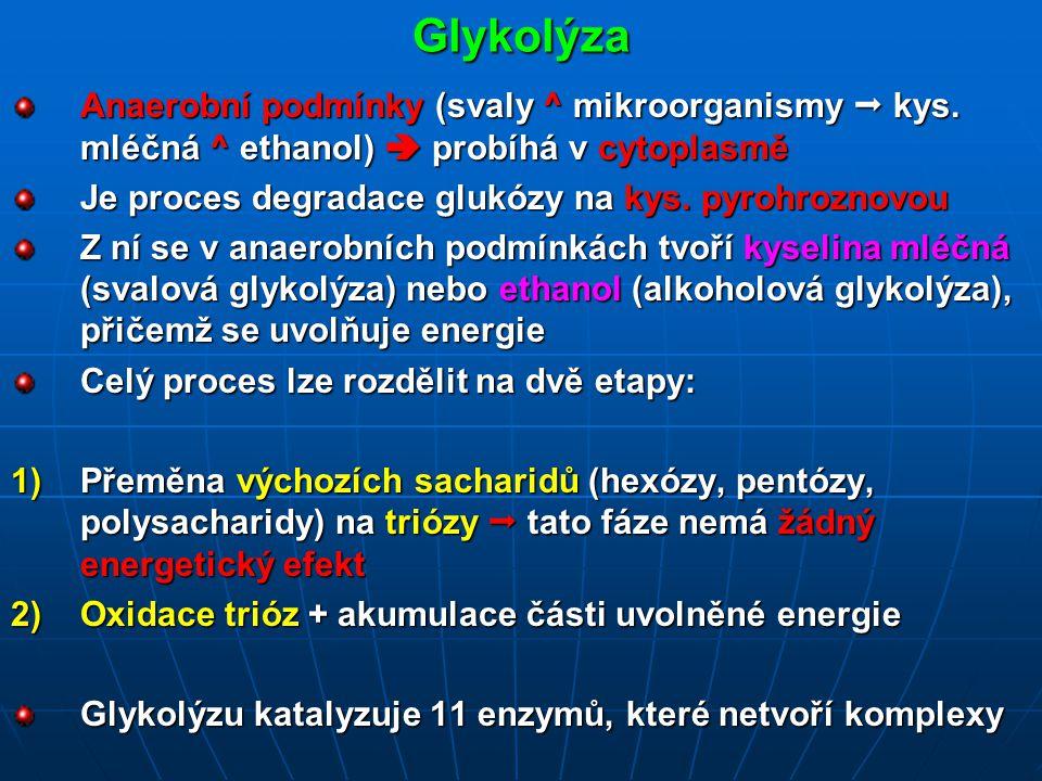 Glykolýza Anaerobní podmínky (svaly ^ mikroorganismy  kys. mléčná ^ ethanol)  probíhá v cytoplasmě.
