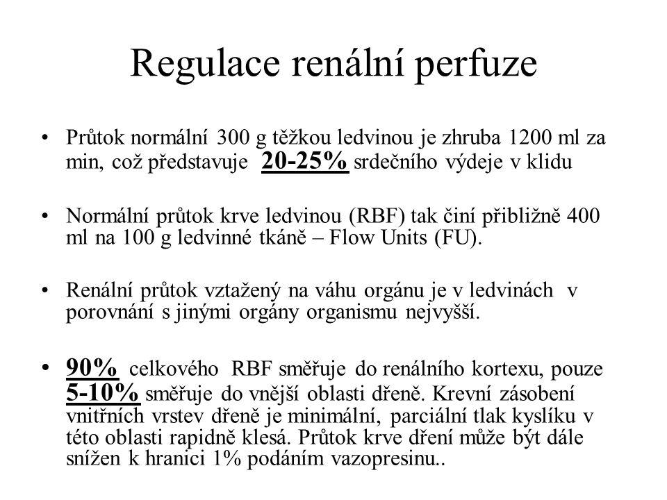 Regulace renální perfuze