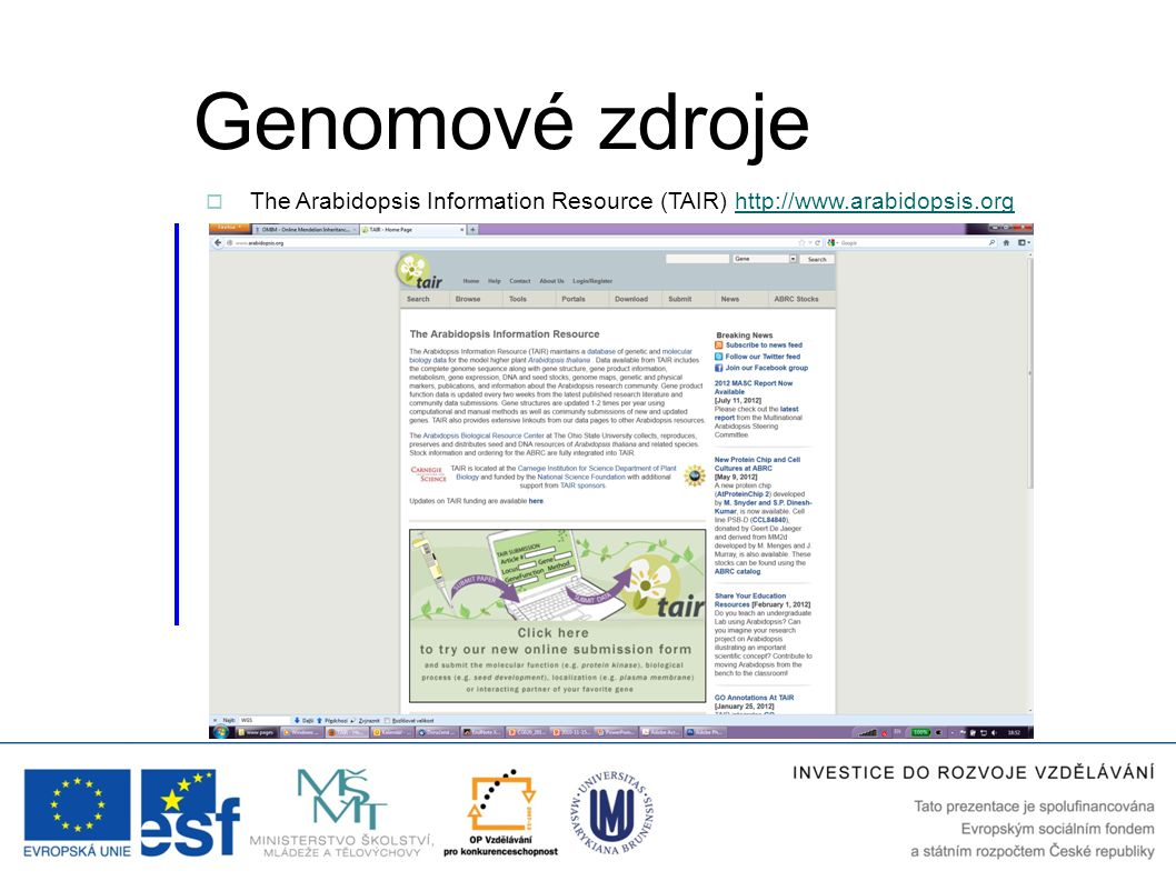 Genomové zdroje The Arabidopsis Information Resource (TAIR) http://www.arabidopsis.org