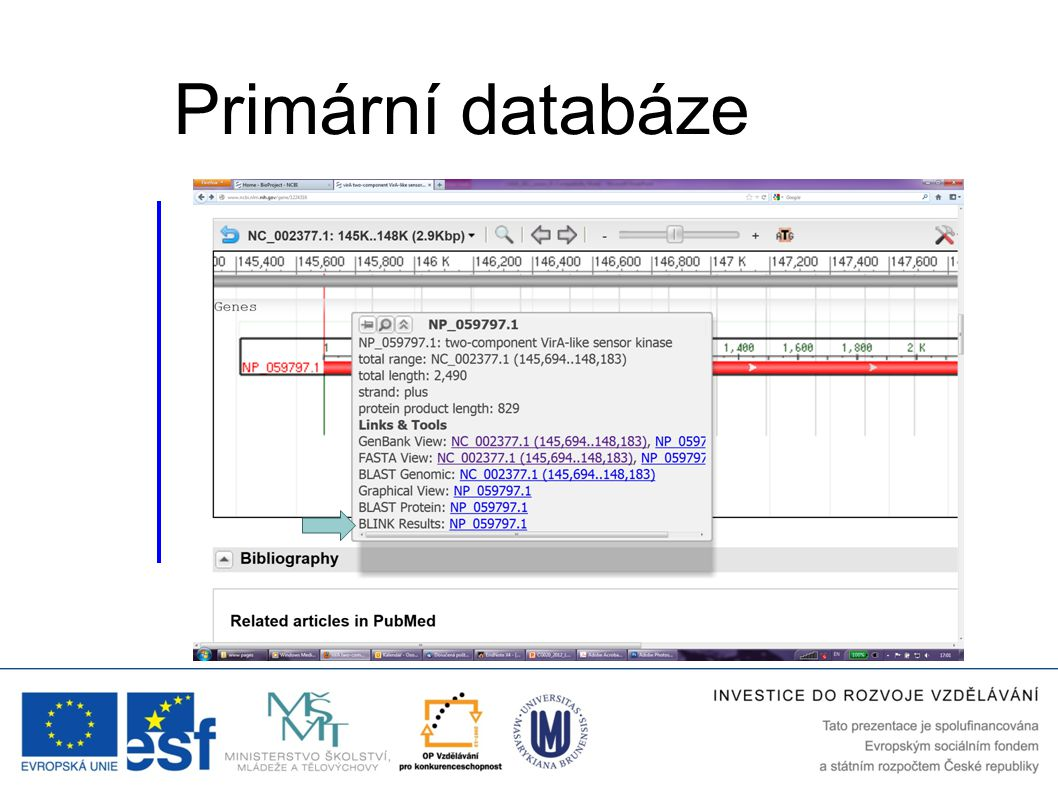 Primární databáze BLINK is a link to the pre-computed BLAST search results for the respective sequence (see the next slide).