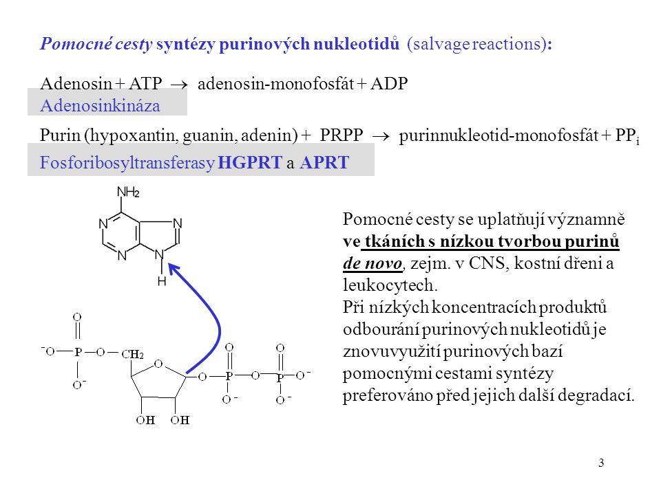 Pomocné cesty syntézy purinových nukleotidů (salvage reactions):