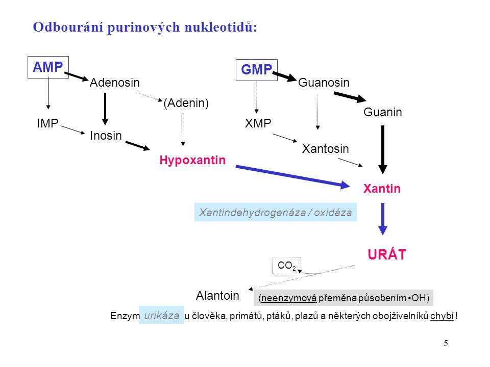 Odbourání purinových nukleotidů: