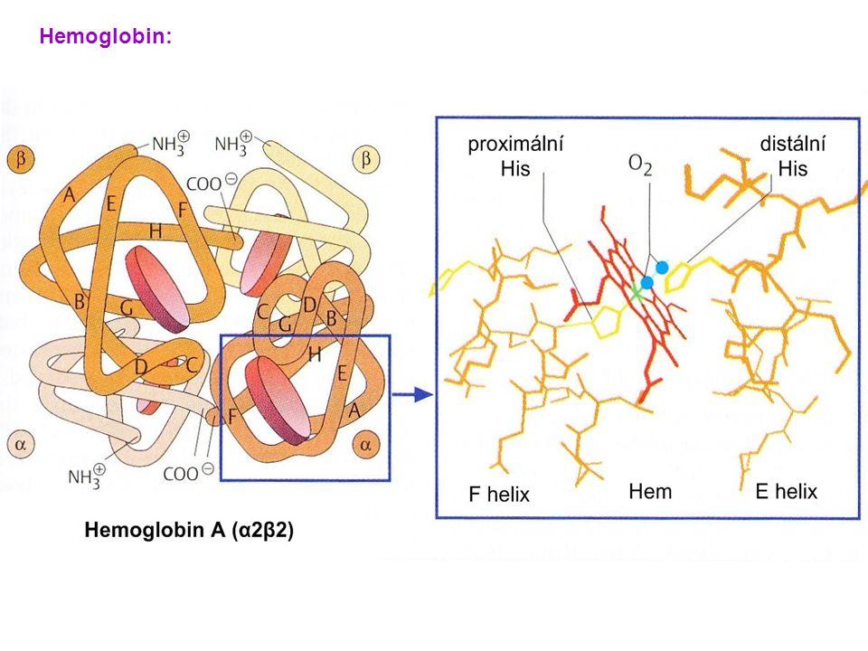 Hemoglobin: