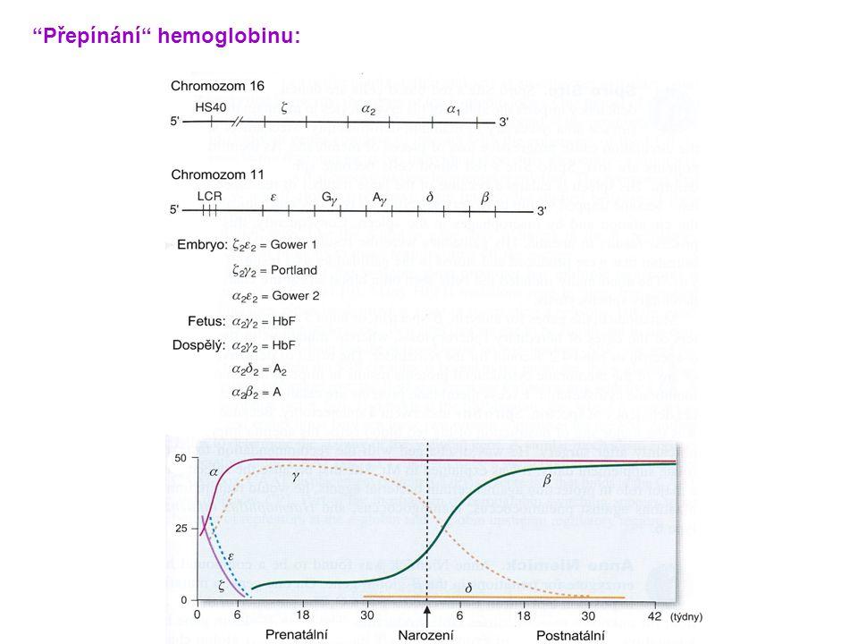 Přepínání hemoglobinu: