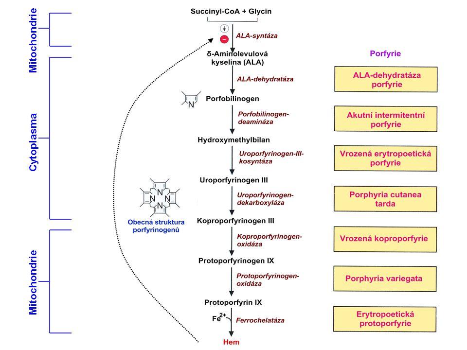 Mitochondrie Cytoplasma Mitochondrie