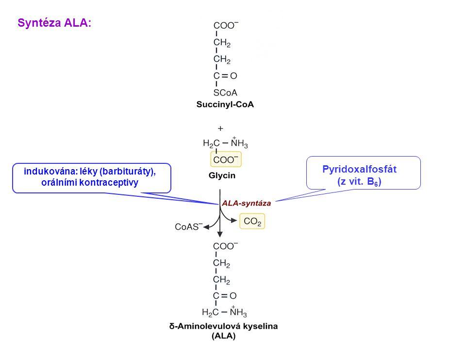 Syntéza ALA: Pyridoxalfosfát (z vit. B6)
