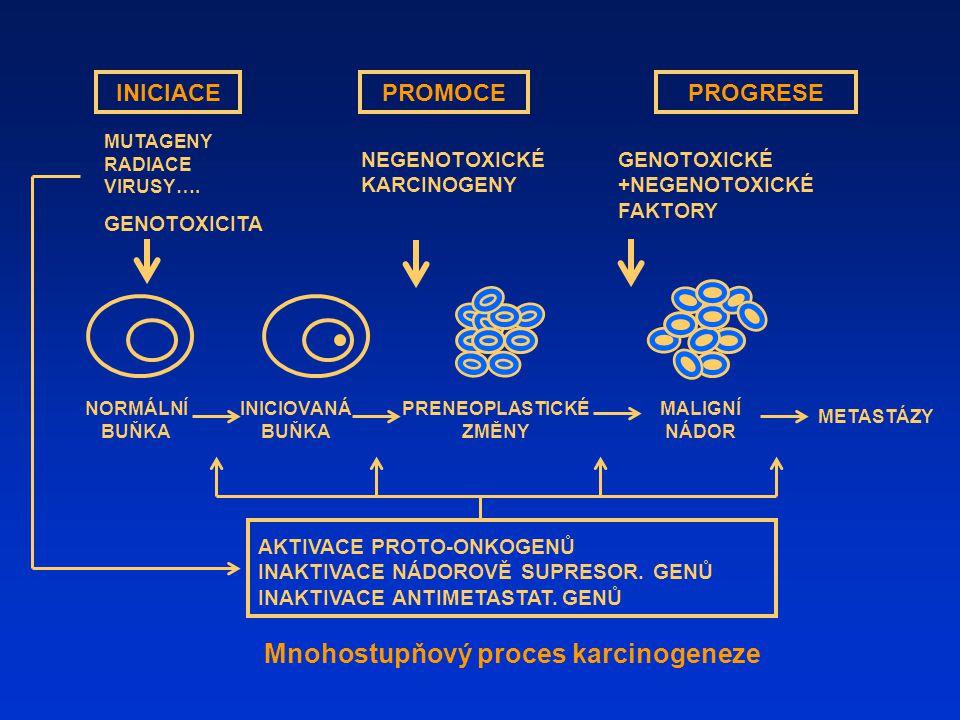 PRENEOPLASTICKÉZMĚNY Mnohostupňový proces karcinogeneze