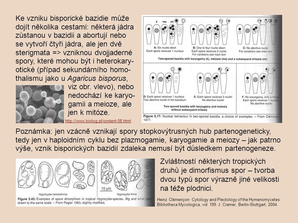 Ke vzniku bisporické bazidie může dojít několika cestami: některá jádra zůstanou v bazidii a abortují nebo se vytvoří čtyři jádra, ale jen dvě sterigmata => vzniknou dvojjaderné spory, které mohou být i heterokary-otické (případ sekundárního homo-thalismu jako u Agaricus bisporus, viz obr. vlevo), nebo nedochází ke karyo- gamii a meioze, ale jen k mitóze.