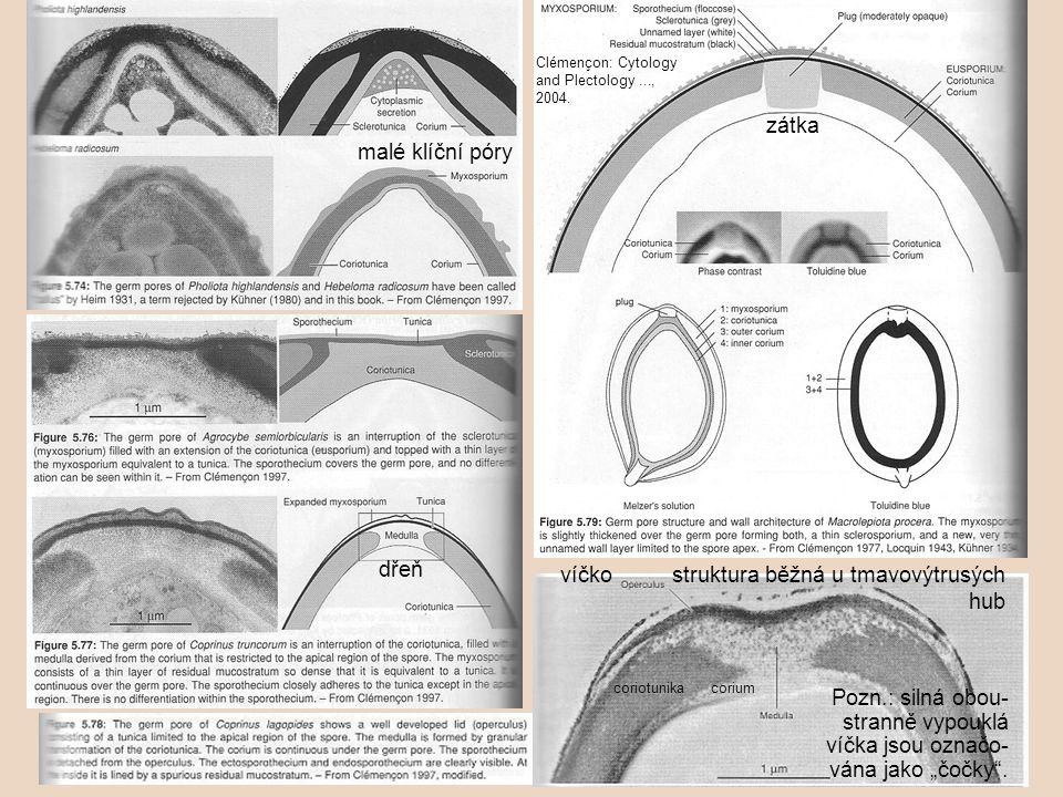 víčko struktura běžná u tmavovýtrusých hub