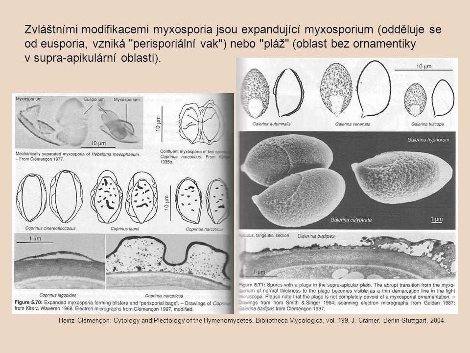 Zvláštními modifikacemi myxosporia jsou expandující myxosporium (odděluje se od eusporia, vzniká perisporiální vak ) nebo pláž (oblast bez ornamentiky v supra-apikulární oblasti).