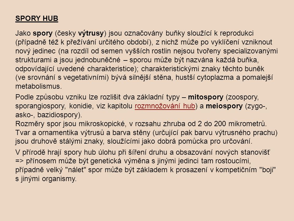 SPORY HUB