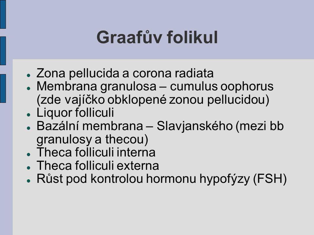Graafův folikul Zona pellucida a corona radiata