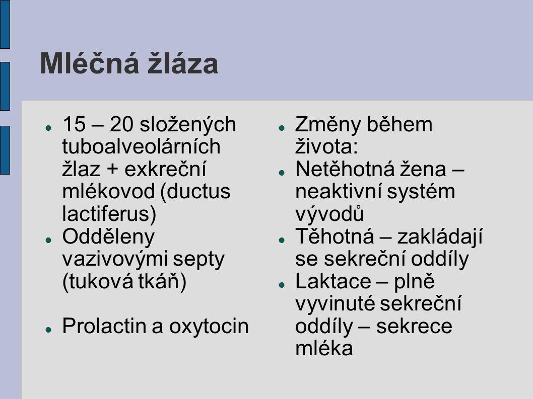 Mléčná žláza 15 – 20 složených tuboalveolárních žlaz + exkreční mlékovod (ductus lactiferus) Odděleny vazivovými septy (tuková tkáň)