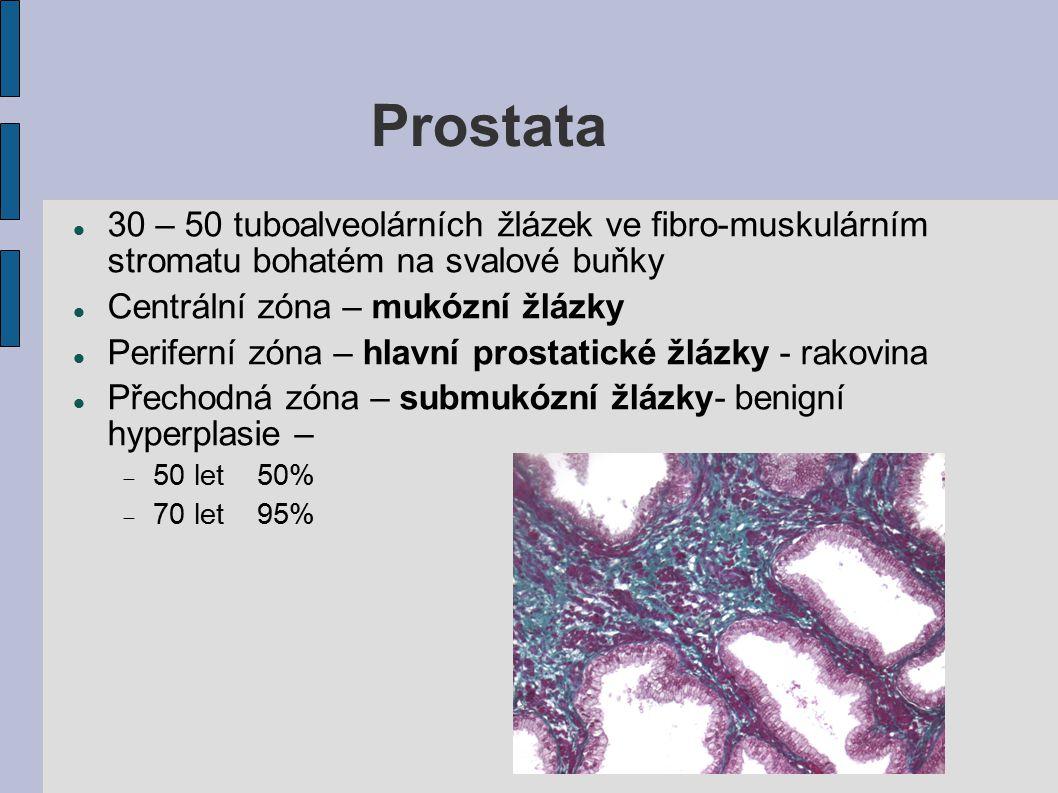 Prostata 30 – 50 tuboalveolárních žlázek ve fibro-muskulárním stromatu bohatém na svalové buňky. Centrální zóna – mukózní žlázky.