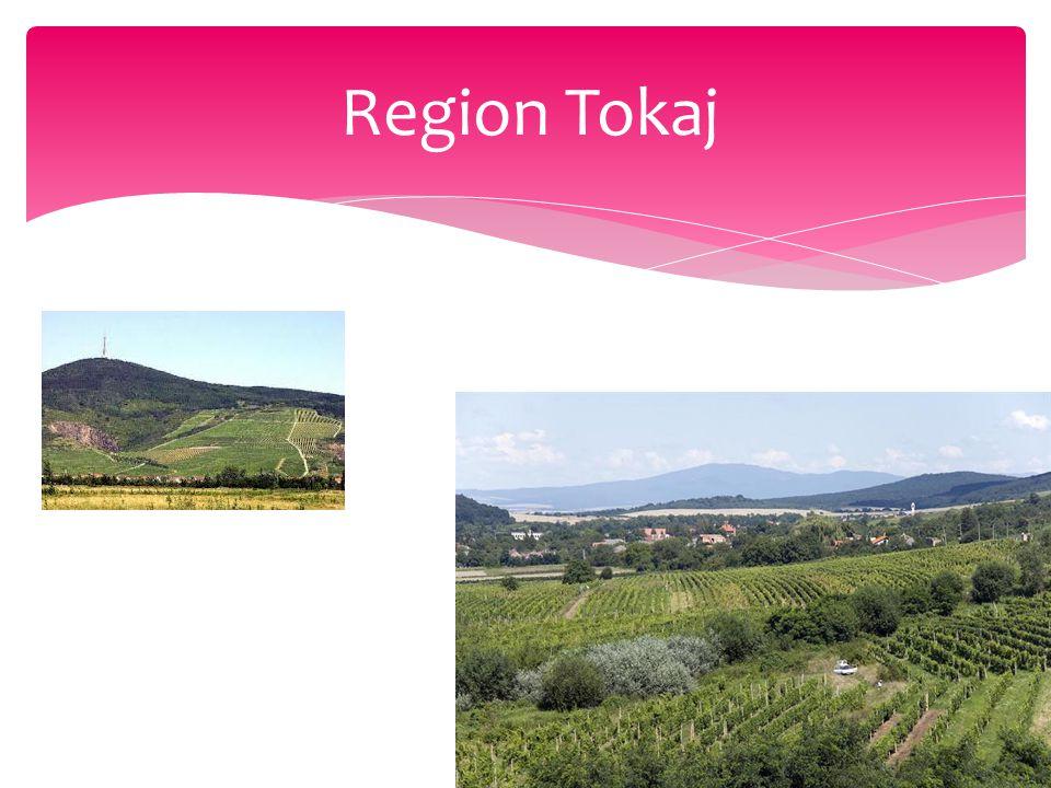 Region Tokaj