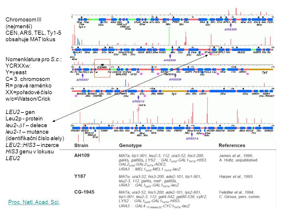 Chromosom III (nejmenší)
