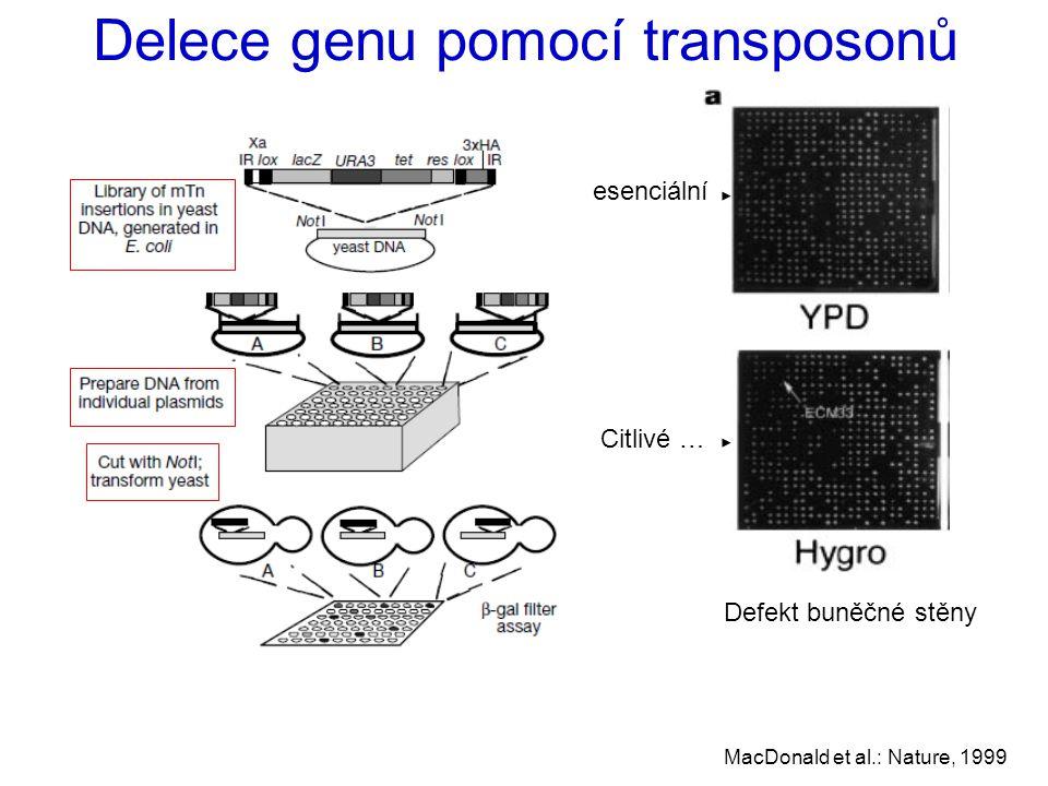 Delece genu pomocí transposonů