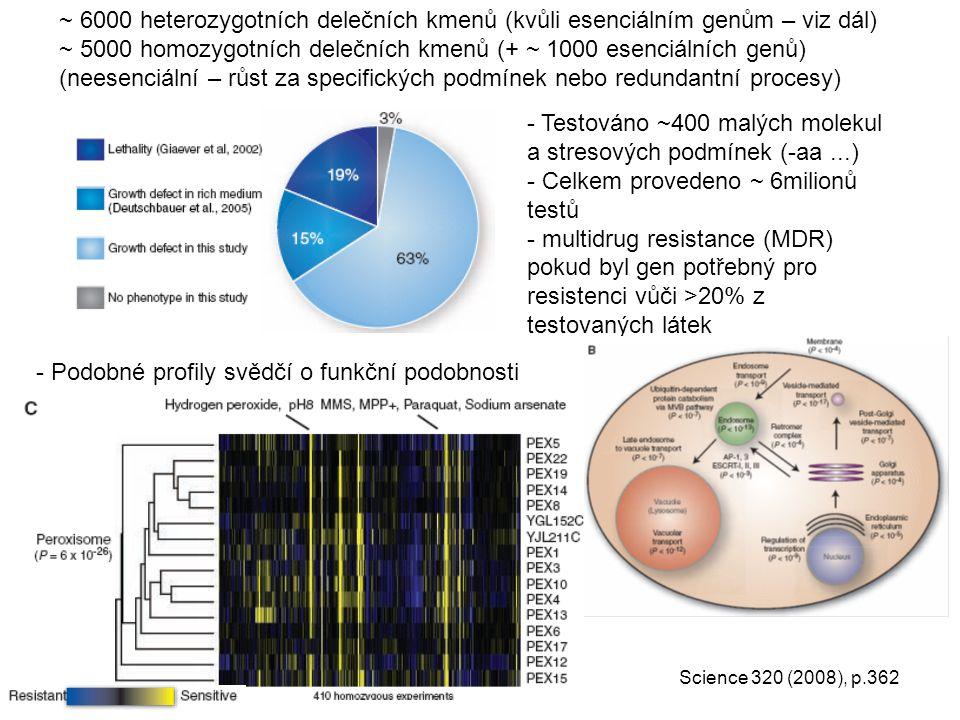 ~ 5000 homozygotních delečních kmenů (+ ~ 1000 esenciálních genů)