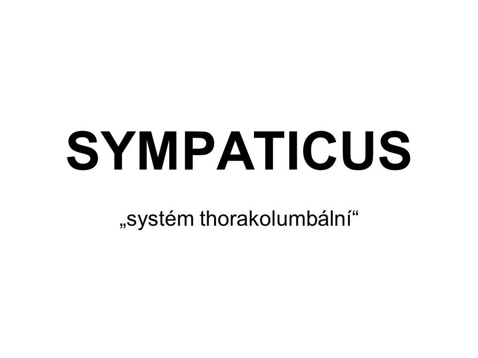 """""""systém thorakolumbální"""