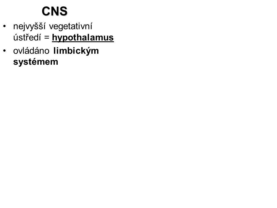 CNS nejvyšší vegetativní ústředí = hypothalamus