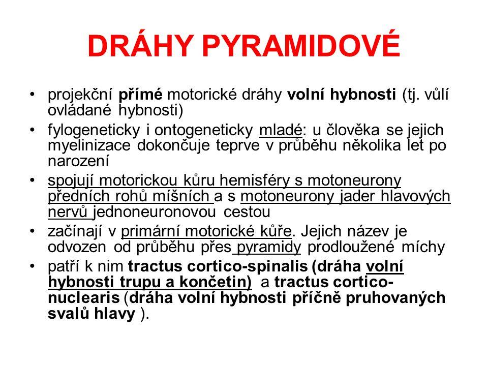 DRÁHY PYRAMIDOVÉ projekční přímé motorické dráhy volní hybnosti (tj. vůlí ovládané hybnosti)