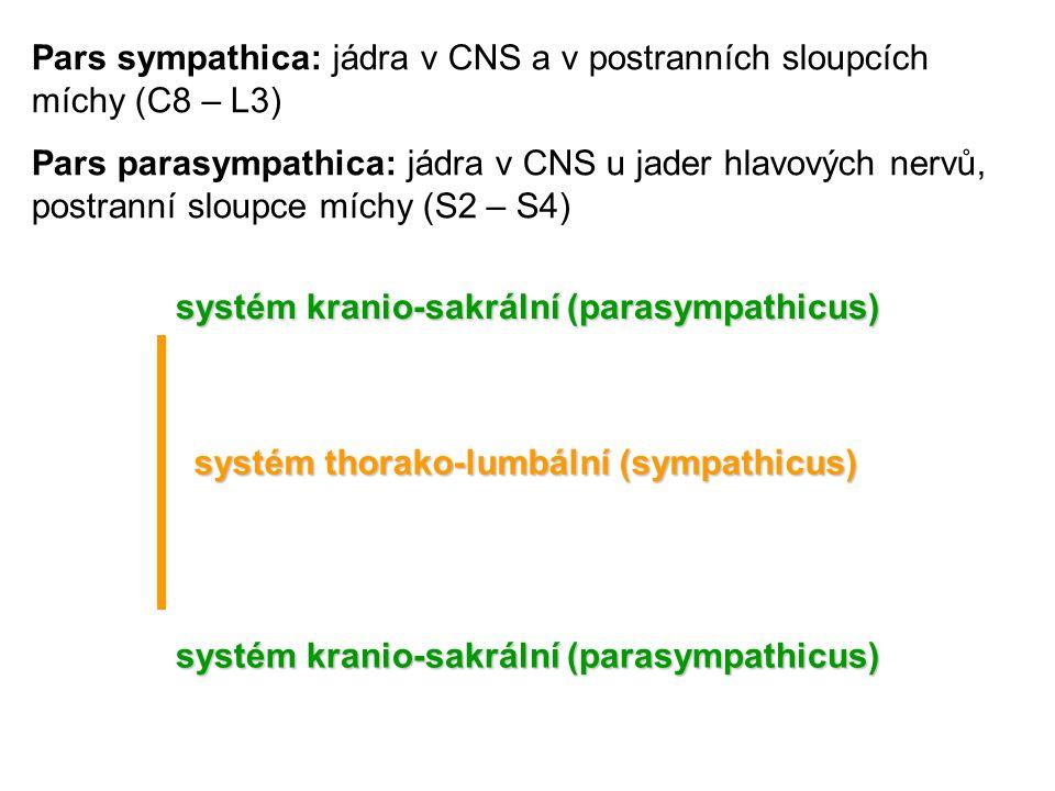 Pars sympathica: jádra v CNS a v postranních sloupcích míchy (C8 – L3)