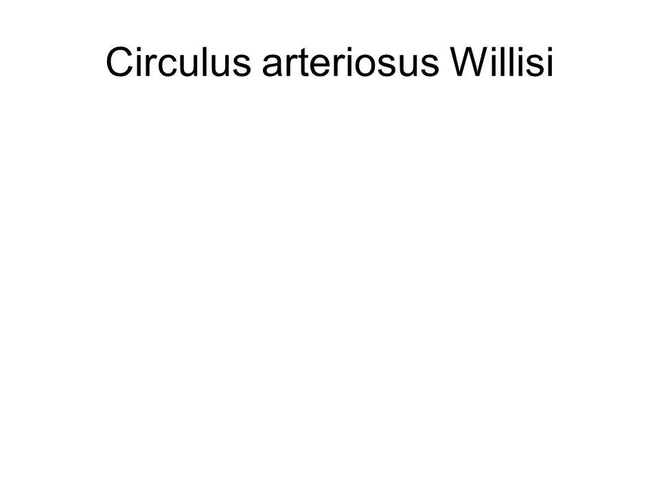 Circulus arteriosus Willisi