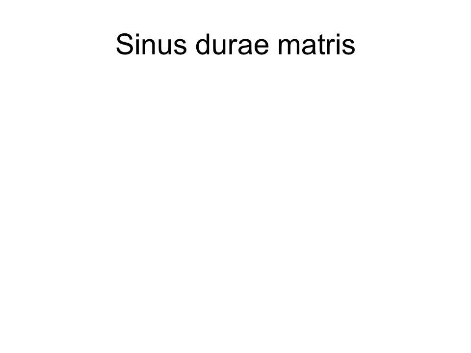 Sinus durae matris