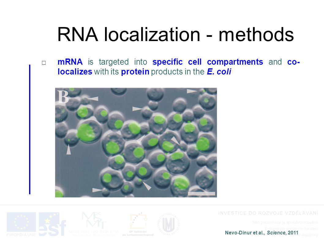 RNA localization - methods