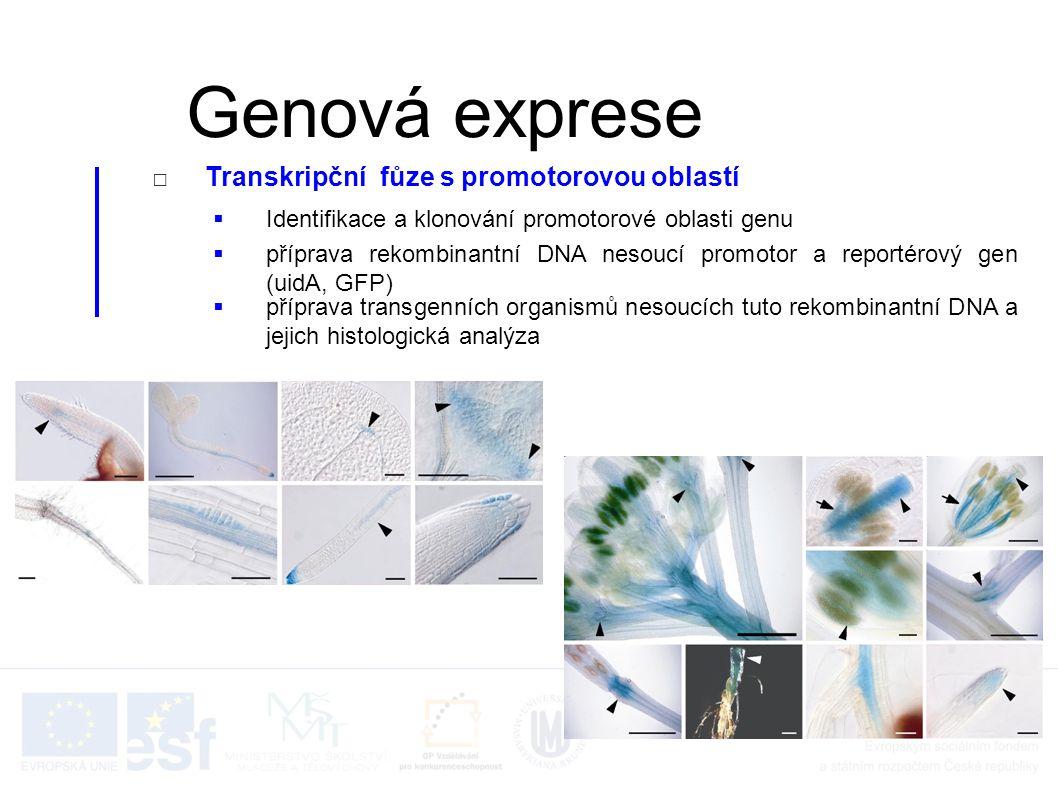 Genová exprese Transkripční fůze s promotorovou oblastí